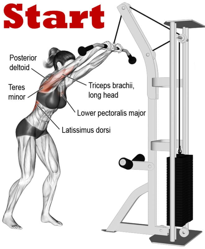 Straight Arm Pulldown Finish Position